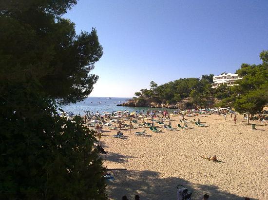 Sandos El Greco Beach Hotel: CALA DEL HOTEL
