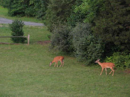 The Inn at Sugar Hollow Farm: Watching the Deer from the upstairs porch