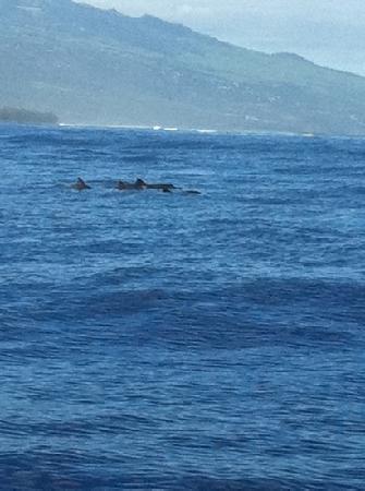 Relais de l'Hermitage Saint-Gilles: Safari baleines:0 baleine,15 dauphins