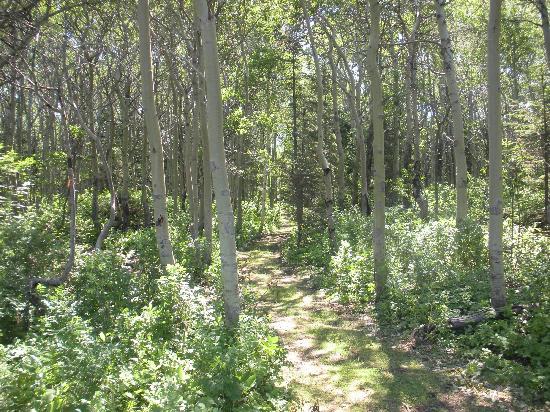 Auberge du Lievre: Un sentier l;umineux en forêt