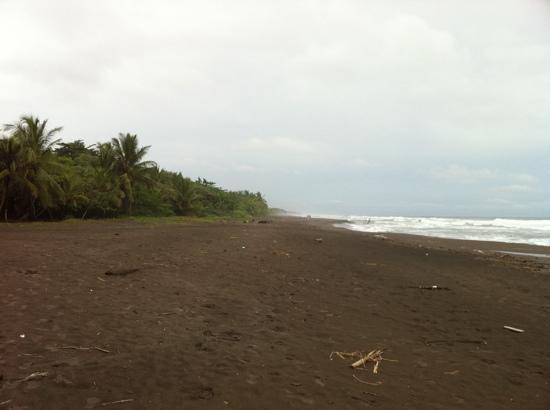Laguna Lodge Tortuguero: playa junto al hotel, no t puedes bañar por las fuertes corrientes