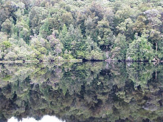 Tazmanya, Avustralya: Forest reflections