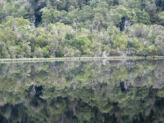 Gordon River: Forest reflections