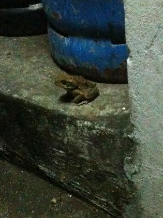 Villa Lodge Hotel: froggy friend