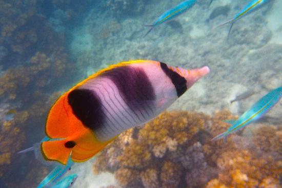 Nadi, Fiji: Amazing snokeling