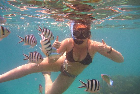 Nadi, Fiyi: Swimming with the fish