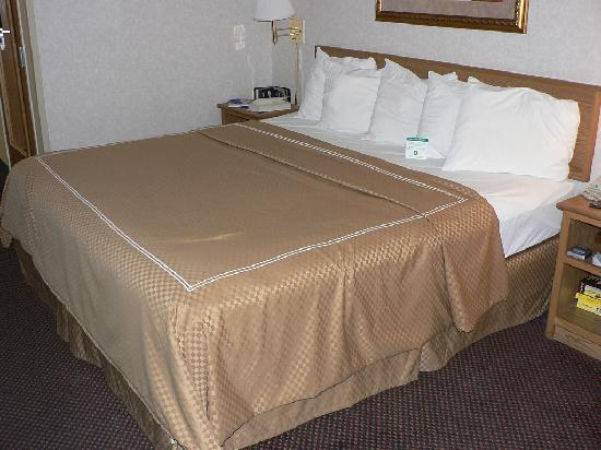 Comfort Suites at Tucson Mall: Great bed