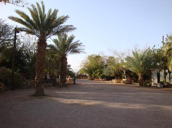 Botanical Garden Of Eilat: space in the middle of the gardens
