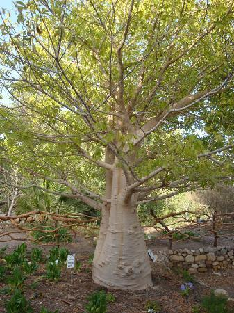 Botanical Garden Of Eilat: this place is full of well established plants that would not normally grow in this area