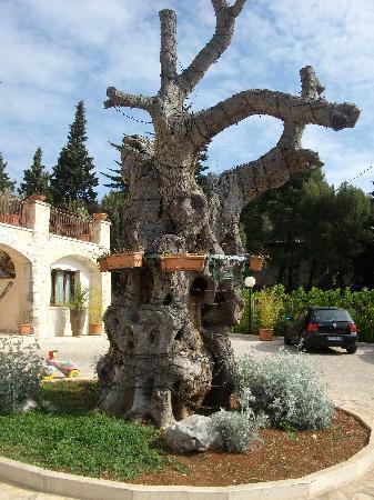 Selva, Italy: spazio antistante l'hotel