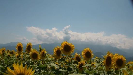 Akeno Area : picture-4