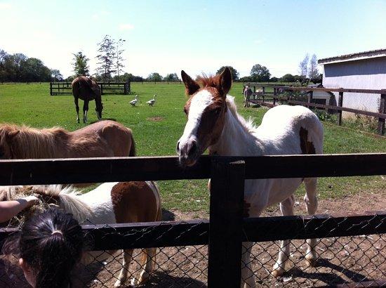Clonfert Pet Farm: horses at clonfert