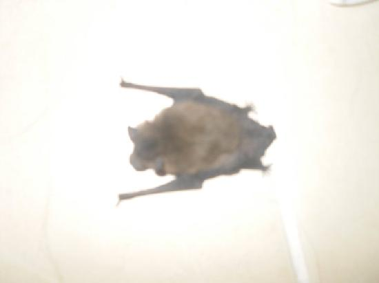SENTIDO Marina Suites- Adult Only: Bertie the bat having a rest on our balcony floor