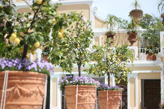 Le Sirenuse Hotel: lemon trees