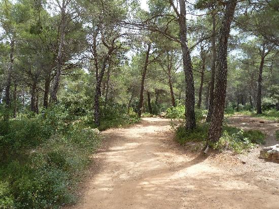 Provence, Frankrike: Weg