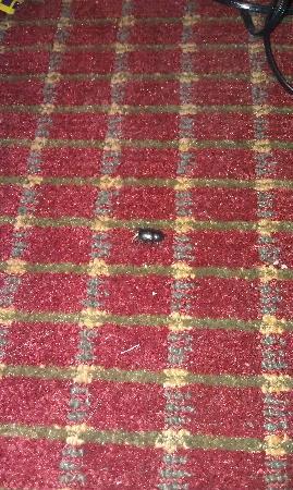 Travelodge Williamsburg Central: large bug!