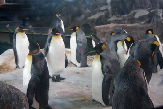 Sea Life Kelly Tarlton's Aquarium: penguins