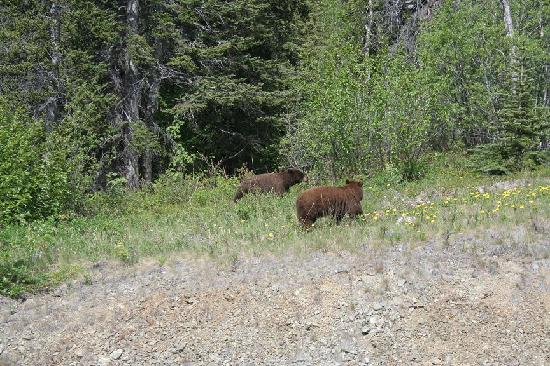 Dyea Dave Tours: bears on the side of the road