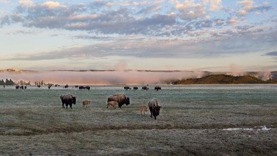 Jackson Hole Eco Tour Adventures : Dawn in Yellowston