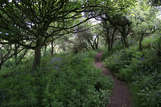 Madron, UK: Pretty path among the trees to the well