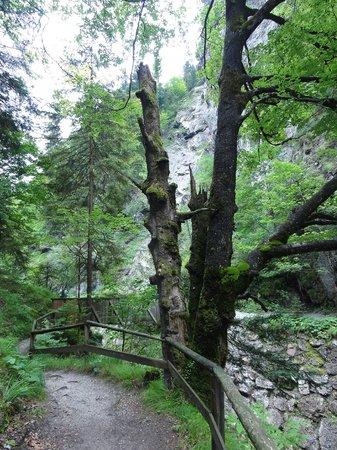 Oberau, النمسا: Im Kundler Klamm