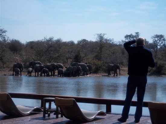 Gomo Gomo Game Lodge: Great game viewing from the deck