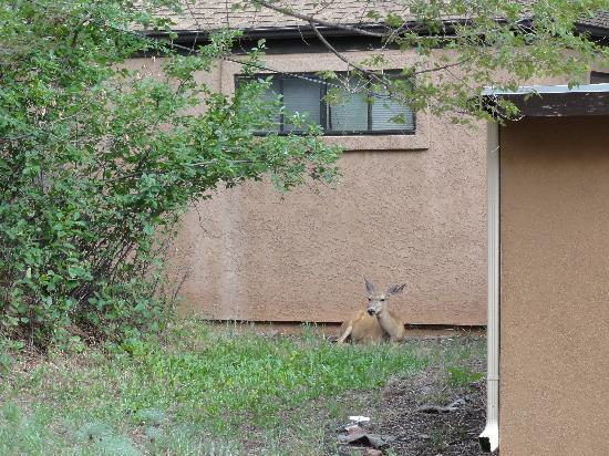 Town-N-Country Cottages: Mule Deer
