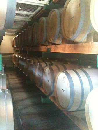 Paradigm Winery : barrels of wine in storage