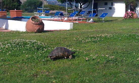 Club Village Forte Cappellini: la natura che ti circonda!
