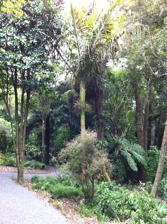 Otari-Wilton's Bush Native Botanic Garden