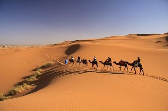excursion with camels in desert erg chebbi merzouga