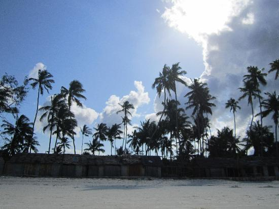 Samaki Lodge & Spa: trees around the beach
