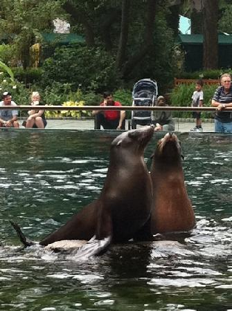 Central Park Zoo : sea lions: a delight to watch (the only one unfortunately)
