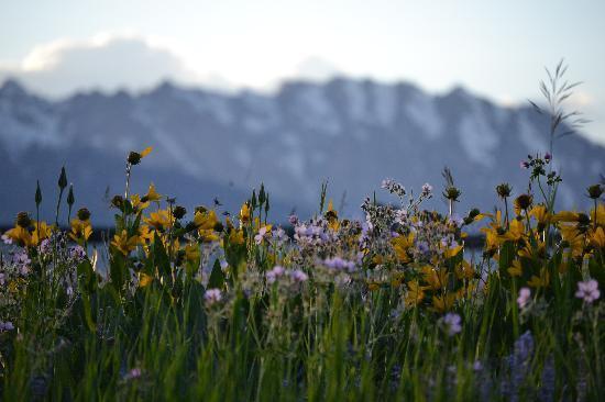 McReynolds Blacktail Cabins: Wildflowers in back fields
