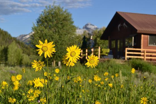 McReynolds Blacktail Cabins: Wildflowers and West Cabin