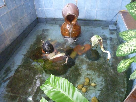 Hotel London: pond