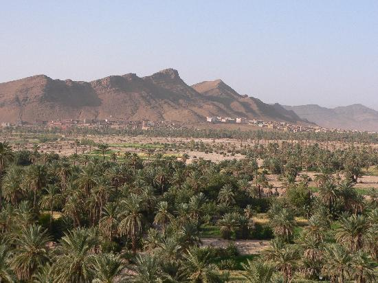 Dar Infiane: vue sur la palmeraie
