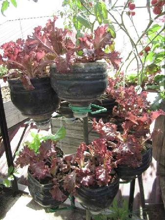 Casa Rap : salad garden
