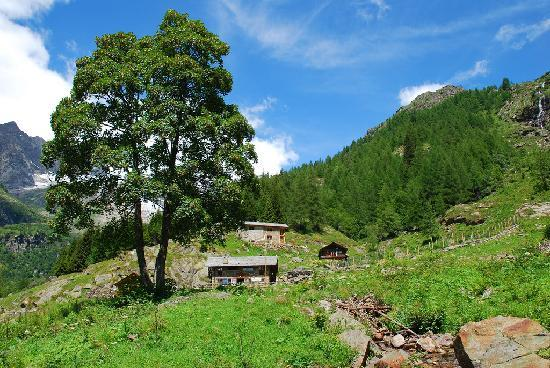 Alagna Valsesia, Italia: Alpe sopra il rifugio Pastore