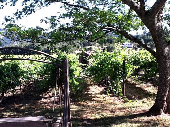 Chelsea Vineyards: In the Shade