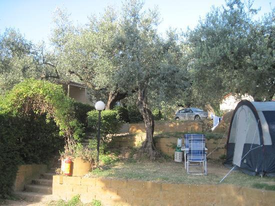 Villaggio Europe Garden : Olivi