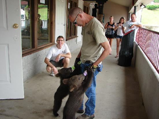 Helen, GA: Feeding bear cubs