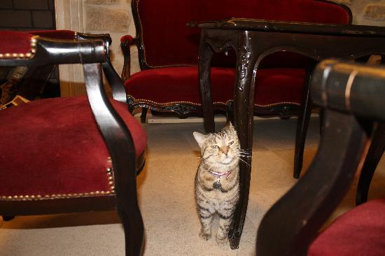 Hotel Europe Saint Severin: Isis, the hotel cat