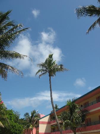 'Tween Waters Island Resort & Spa: Beautiful, unusual palm tree on site