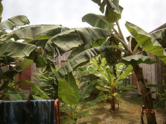Jaidii Guesthouse : Rear garden