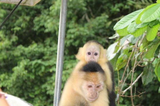 Gatun Explorer Panama Canal Jungle Day Tour