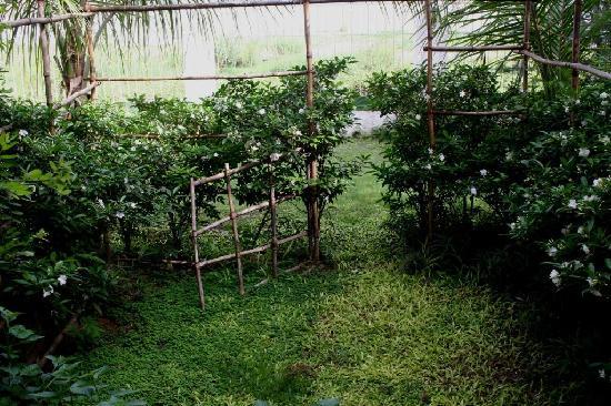 Villa Soudan: Petit jardin de la chambre