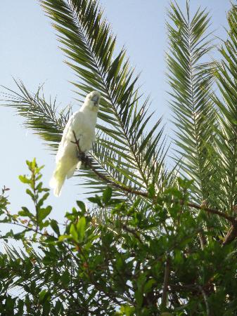 Dar Ayniwen Villa Hotel: Garten