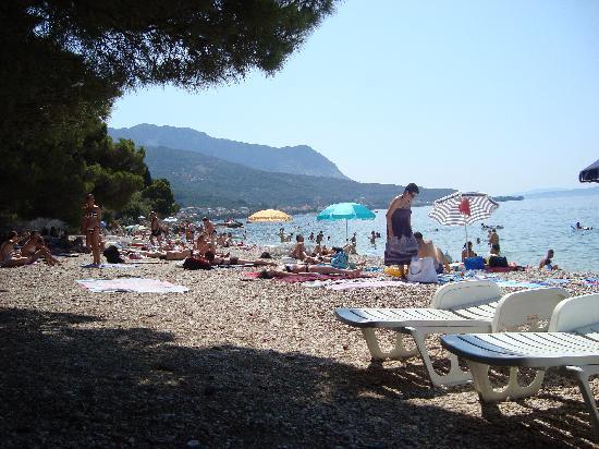 Bluesun Resort Afrodita: Beach area