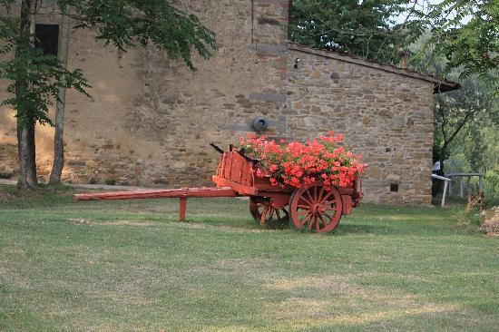 Agriturismo Il Poggio alle Ville: beautiful summer flowers